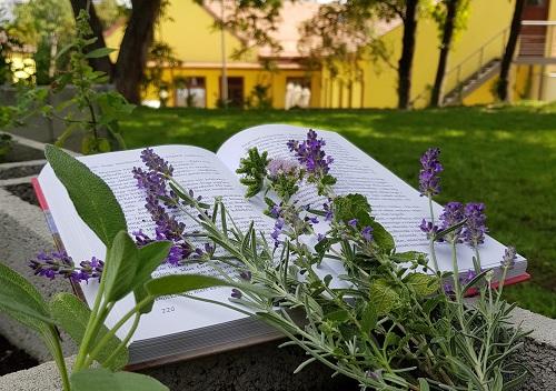 Zöld Könyvtár díjat nyert könyvtárunk